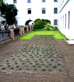 Mendel's garden still planted today